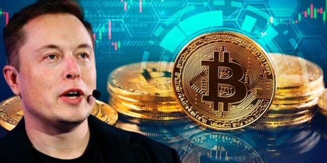 Elon Musk supports Bitcoin, there was a rapid rise